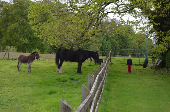 Carriglea House: Paddy the Donkey, Prince the Horse, and our little one