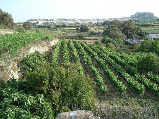 Ta' Mena Estate