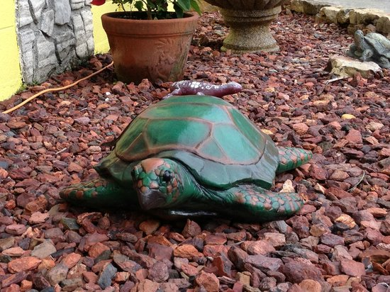Conclare Aman's Beach Resort: Nice garden with turtles