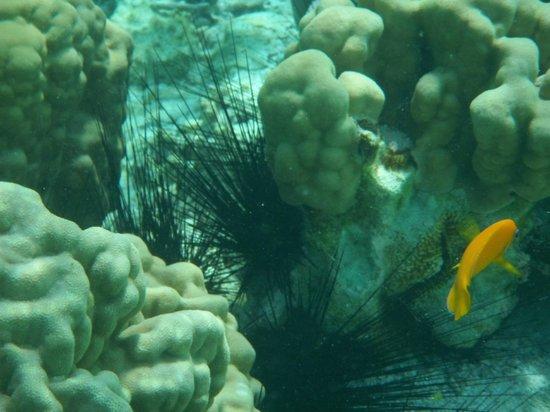 Vahine Island Resort: Snorkeling