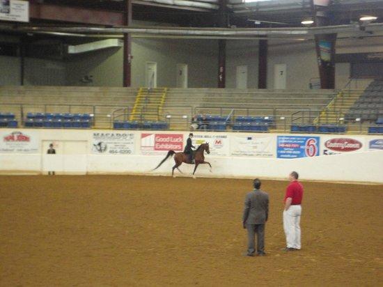 Virginia Horse Center: Pleasure Hunt 1