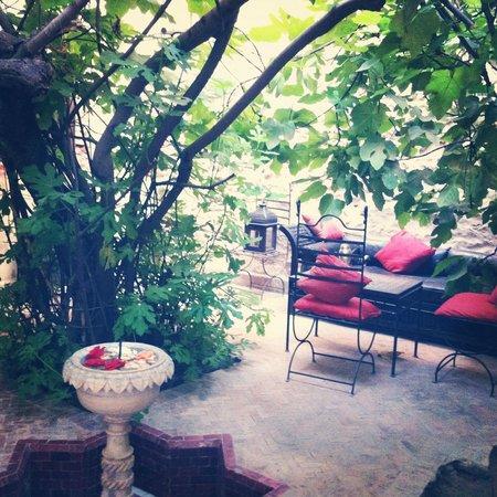 Dar Abiad : Le jardin arriere
