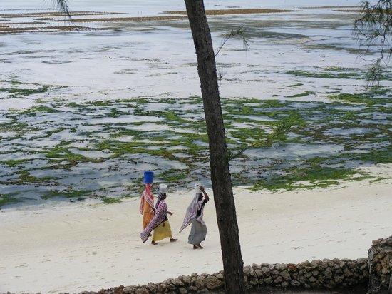 Seasons Lodge Zanzibar: view