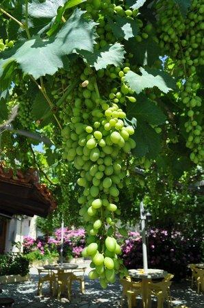 Villa Angela: Grapes