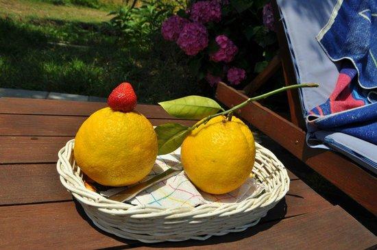 Villa Angela: Fruits
