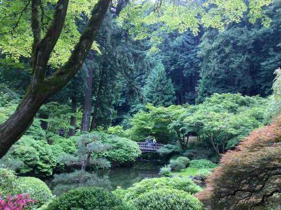 Wisteria Vine Picture Of Portland Japanese Garden Portland Tripadvisor