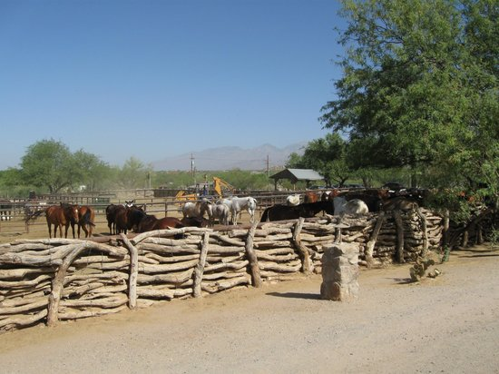 Tanque Verde Ranch: Some of their horses
