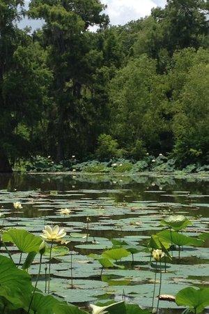 Lake Martin : Beautiful!