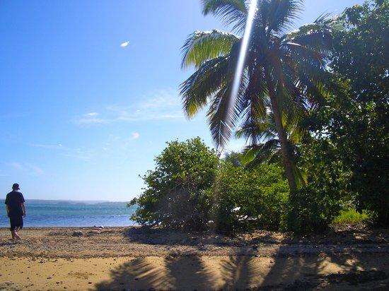 Mafana Island Beach Backpackers : Walk on the Beach