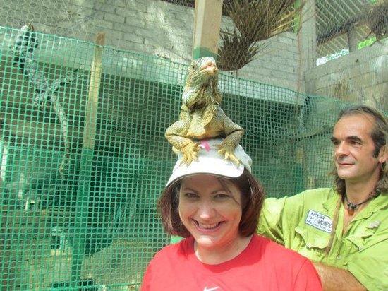 Aventura Mundo: At the iguana santuary...Stephen puts a friendly iguana on my head.