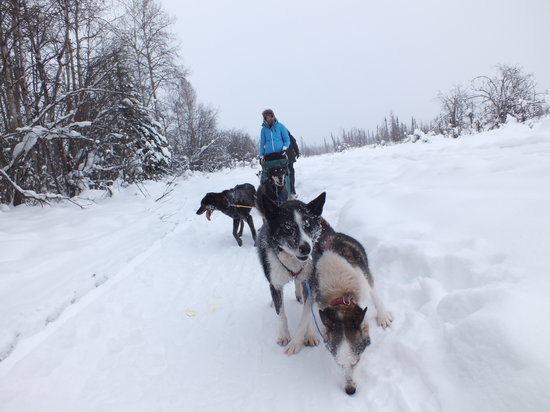 Paws for Adventure: Mushing school