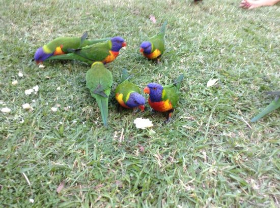 Cedar Creek Lodges: Right outside our room -  lorikeet lodge