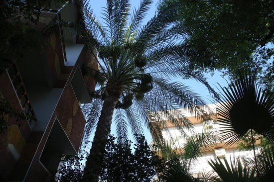 Amon Hotel Luxor: Looking up