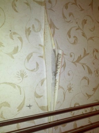 Ramada Denver Midtown: This is why old wallpaper is not a good idea in a poorly ventilated bathroom