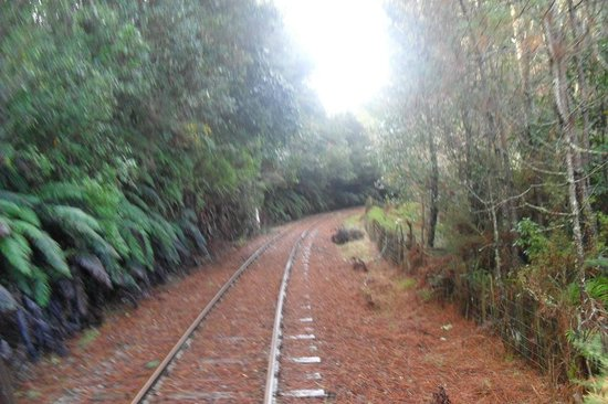 Railcruising: Being part of the forrest