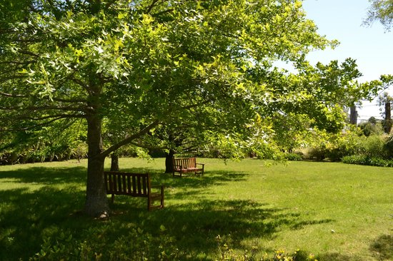 Posada la Merced: Jardin