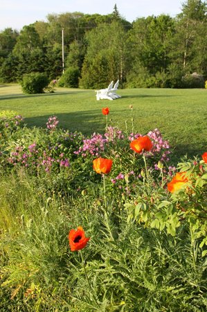 Gray Gables Bed and Breakfast: Poppies in the garden