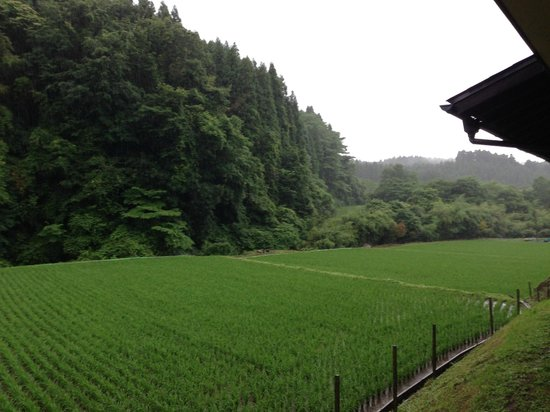 Yamashinobu: rice field & forest view from the hotel