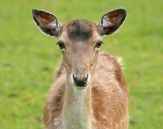 Best Western Whitworth Hall Hotel: Deer in the park