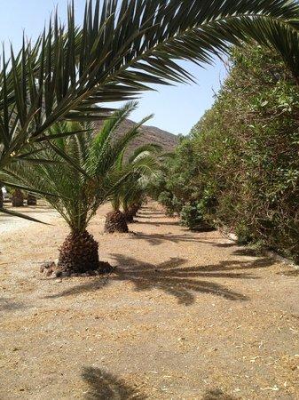بيلاجوس هوتل أويا: pelagos grounds