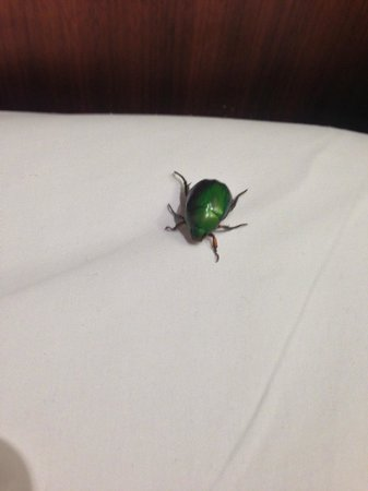 Amara Sanctuary Resort Sentosa: Beetle next to pillow