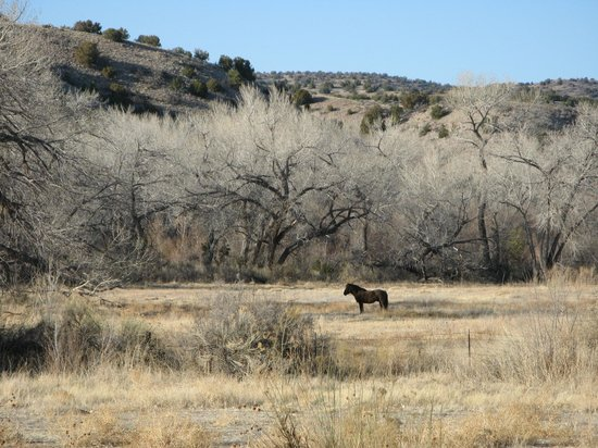 Ojo Caliente Mineral Springs Resort and Spa: Horse in Pasture Just Outside Ojo