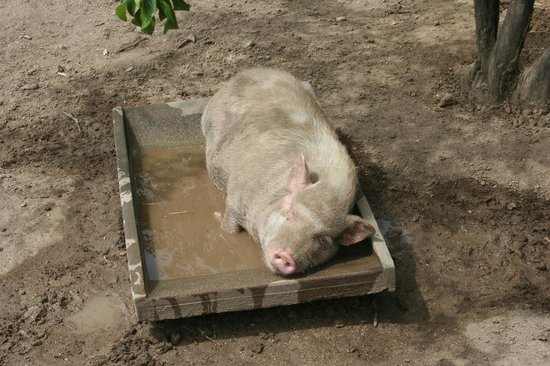 Terre de Rose Distillerie: One of the residents, enjoying an afternoon of sunshine.