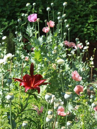 Dixon Gallery & Gardens: Poppies, Lilies and more surrounded arches in the flower garden