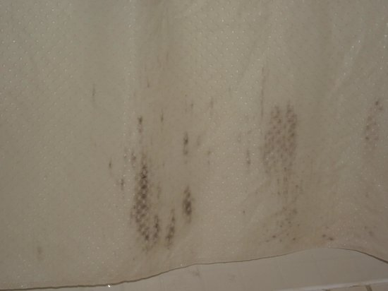 Smoky Mountain Inn & Suites : Mold