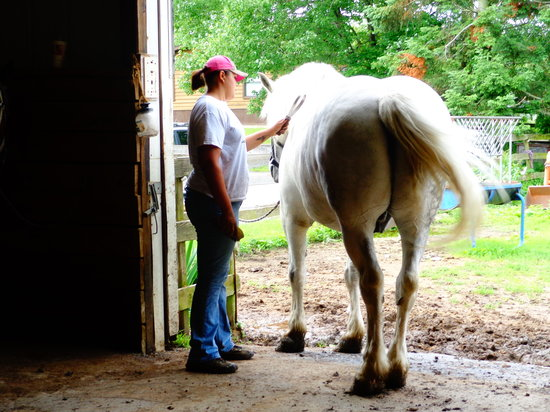 Bullville, NY: Gentle horses and friendly wranglers who love their jobs and care about our animals.