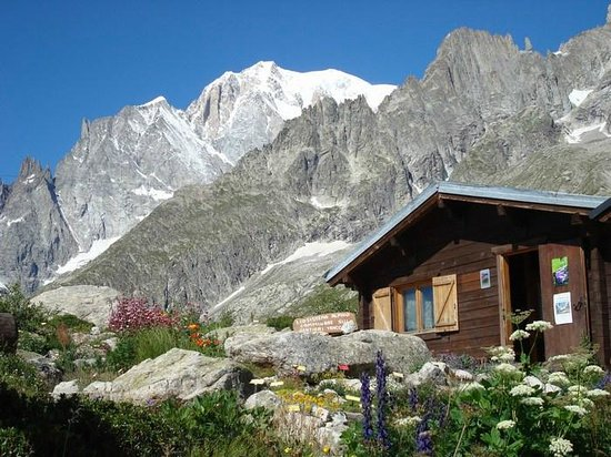 Alpine Botanical Garden Saussurea