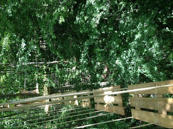 Go Ape Treetop Adventure Course: After the last obstacle
