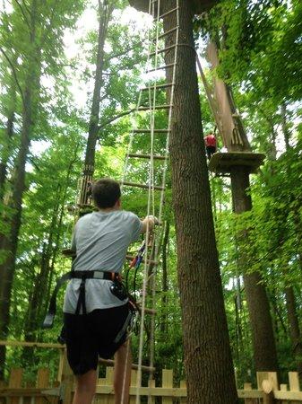 Go Ape Treetop Adventure Course: 4th ladder