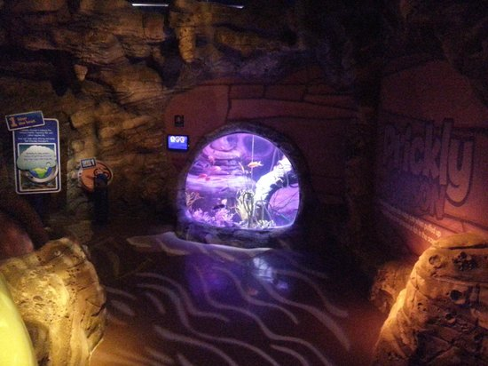 ... the middle - Picture of Sea Life Manchester, Stretford - TripAdvisor