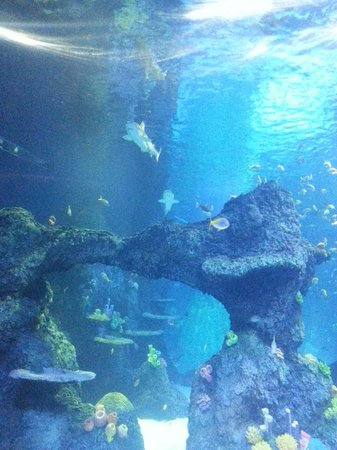 the big tank - Picture of Sea Life Manchester, Trafford - TripAdvisor