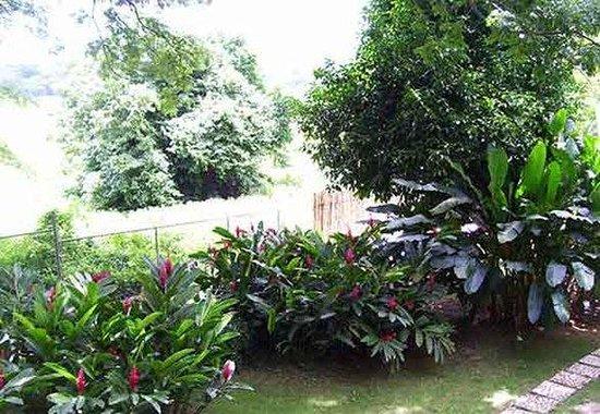 Sunset Heal Jamaica: Viewplants