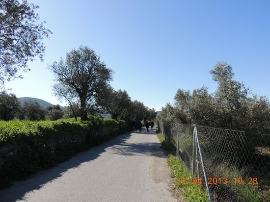 Olive Oil Tour : As oliveiras....