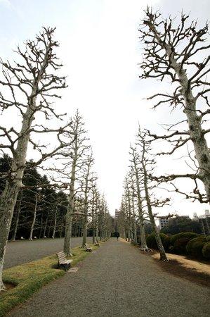 Shinjuku Gyoen National Garden: French Formal Garden