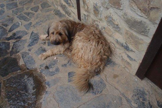 Posada Las Espedillas: Farm Dog