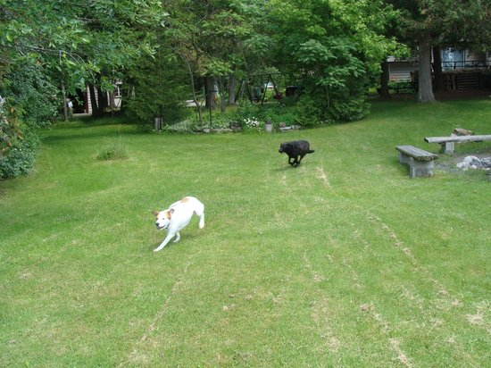 Prestwood Cottages: Dogs having fun!