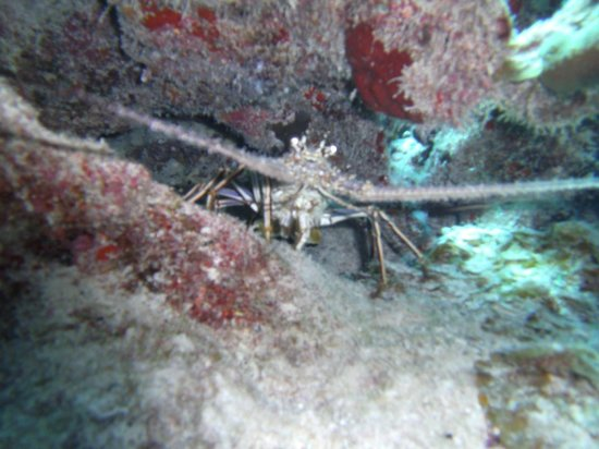 Dive Exuma: what's for dinner