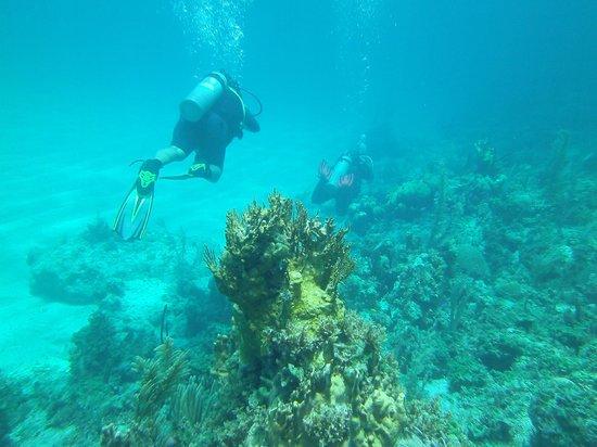 Dive Exuma: reef dive