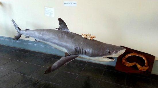 Fishing Museum : tubarões