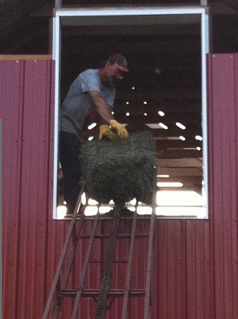 The Dairy Barn Bed and Breakfast: We still farm a bit, summer is a busy time.  Make hay while the sun shines!