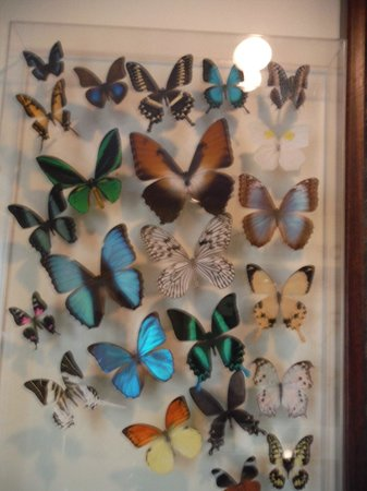 The Original Mackinac Island Butterfly House & Insect World: many perfect butterflies killed young and dried for you to buy in this frame. I asked price: $10