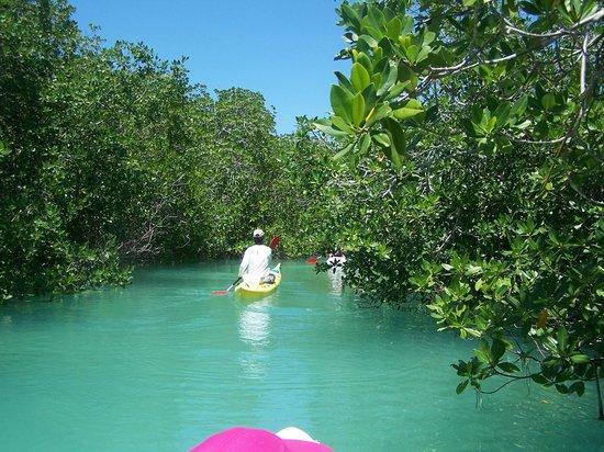 Yucatan Outdoors: Antonio in the mangroves