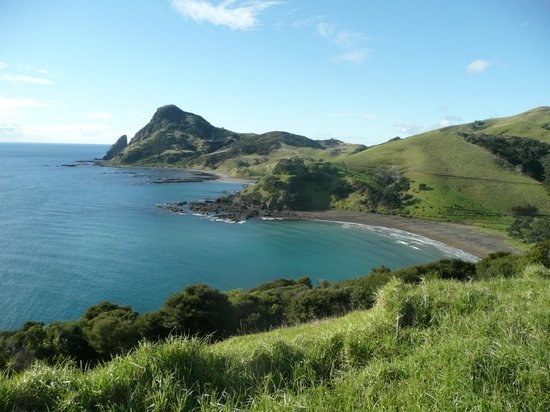 Coromandel Discovery Day Tours: Fletcher Bay - Start of the walk