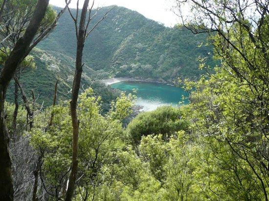 Coromandel Discovery Day Tours: En Route
