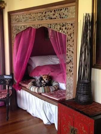 Bamboo Cottage B&B: our little buddy brought his own little bed but was very welcome!