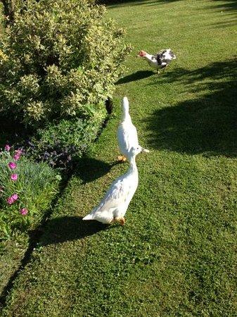 Bostrase Bed & Breakfast: duckies
